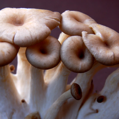 shimeji mushroom© by haalo