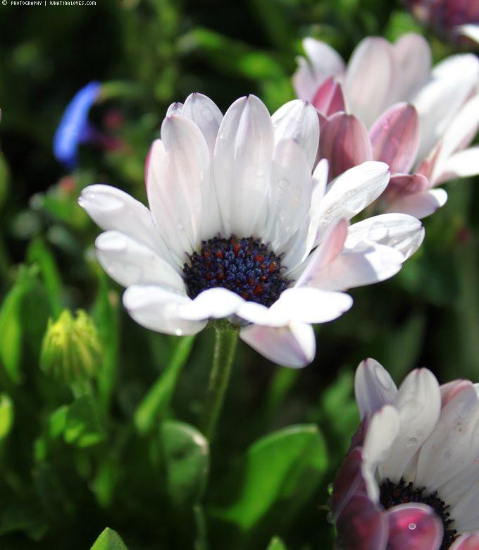 http://i402.photobucket.com/albums/pp103/Sushiina/cityglam/gras5_zps4a7edd19.jpg