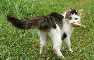 Cats love fish