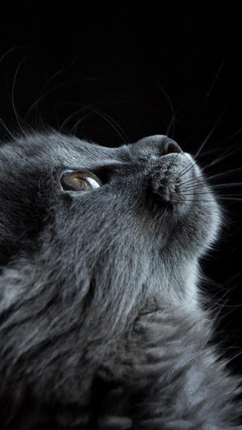خلفية حيوانات لقط ينظر إلى الأعلى بدقة عالية hd