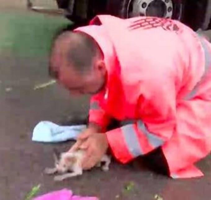 Un pequeño gatito se estaba ahogando y aparece un héroe para salvarle la vida