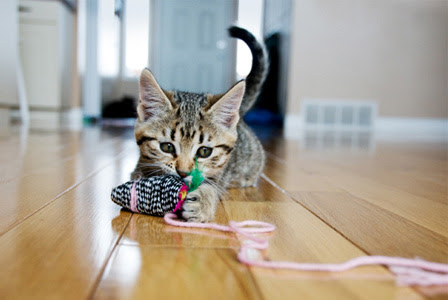 http://cdn.sheknows.com/articles/2012/12/kitten-playing-with-toy-mouse-horiz.jpg