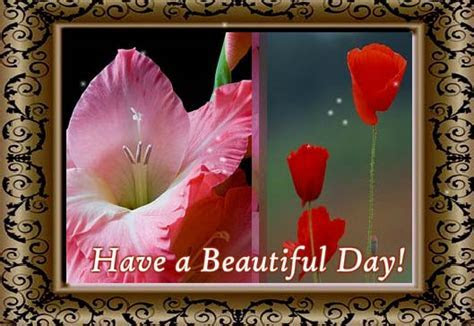 Beautiful Gladiolus And Poppy Flowers. Free August Flowers