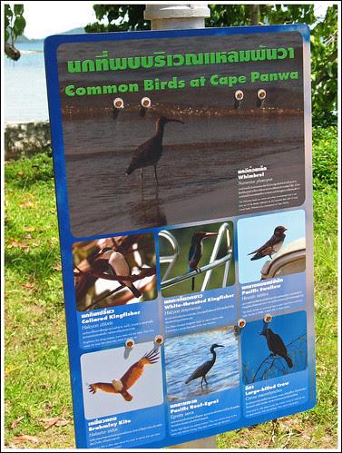 Sign about birds at Phuket Aquarium