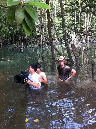 Shooting in the mangrove again