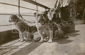 Dogs on the R.M.S. Titanic