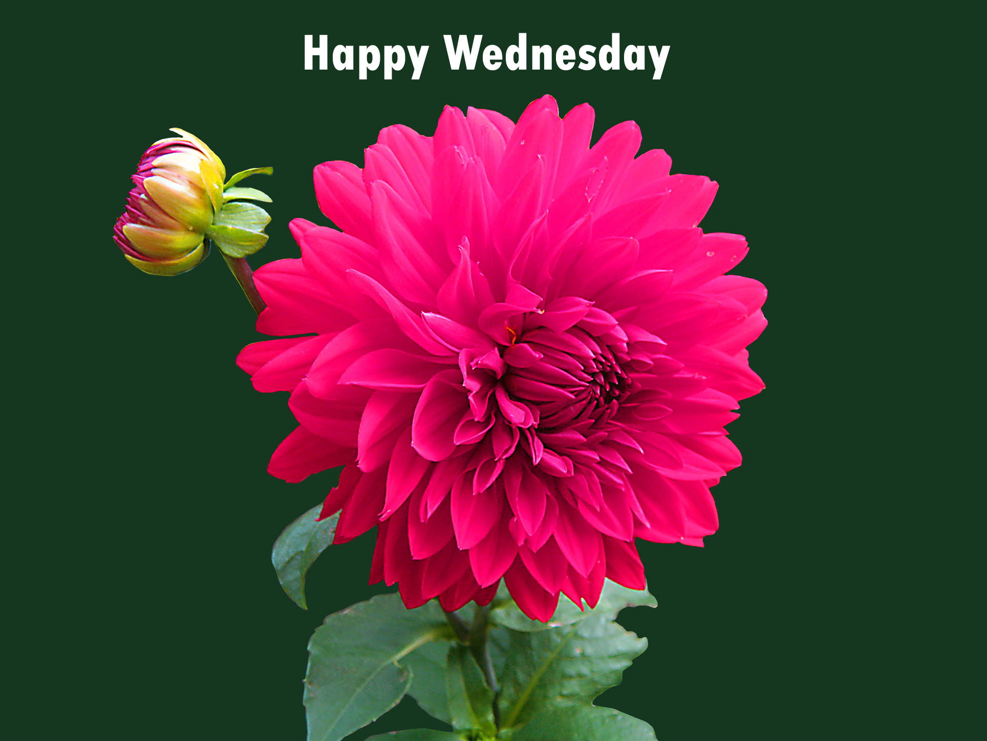 211 Good Morning Wednesday Images Greetings Picture For Whatsapp