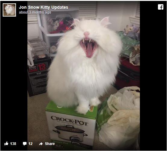 γάτες γατάκι Γάτα βασανισμένο γατάκι