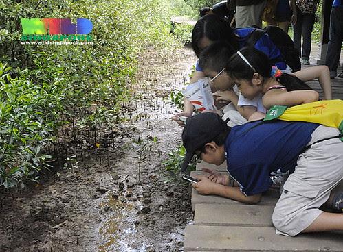 Kids on the Chek Jawa boardwalk