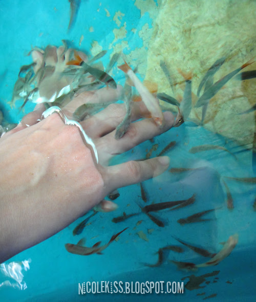 hand in fish spa