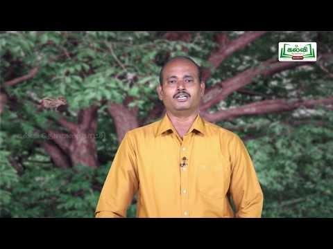 யாமறிந்த மொழிகளிலே Std 11 தமிழ் ஆத்மாநாம் கவிதைகள் Kalvi TV