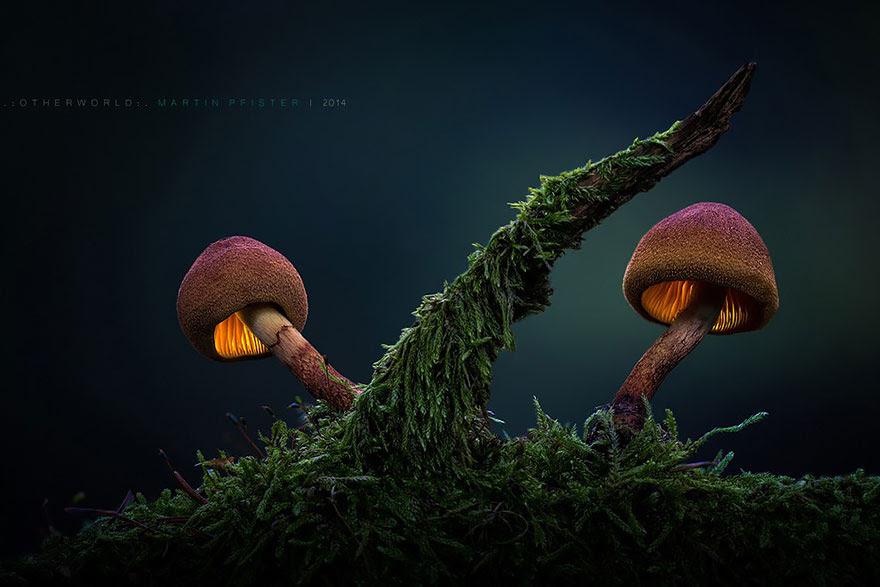 mushrooms-martin-pfister-12