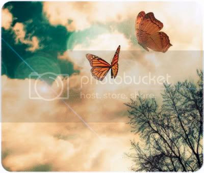 butterflies Pictures, Images and Photos