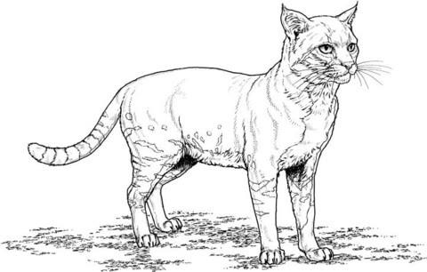 Dibujo De Gato Realista Para Colorear Dibujos Para Colorear