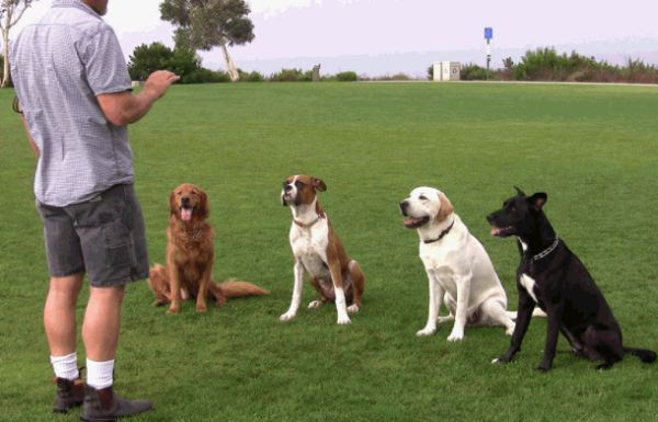 Education Your Dog Ideas That Each Pet Owner Should Know