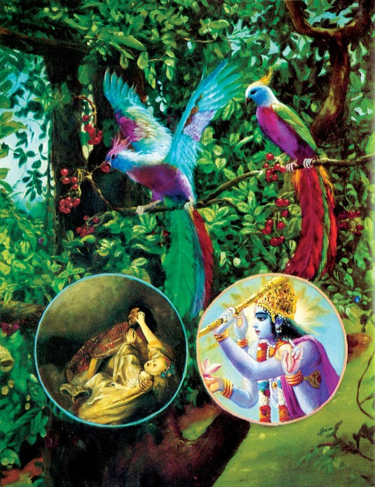 Krishna and the living entity are seated on the tree of the body