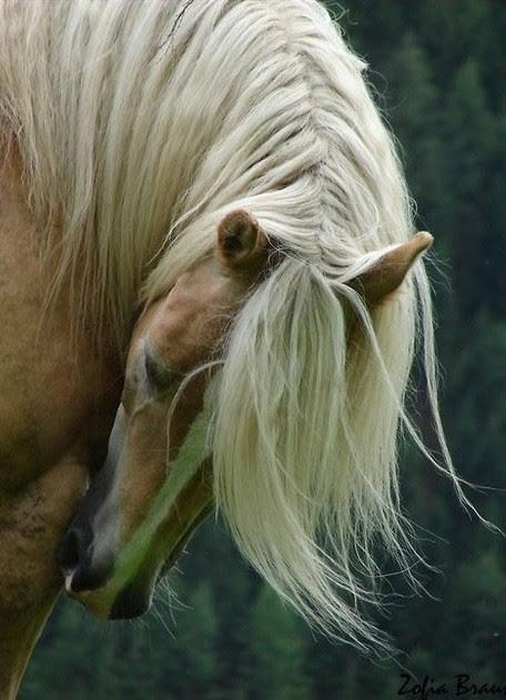 thepaintedbench:  Blonde Mane