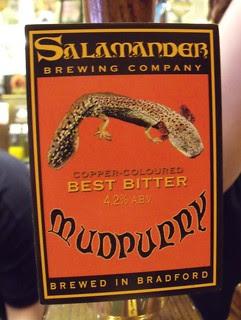 Salamander, Mudpuppy, England
