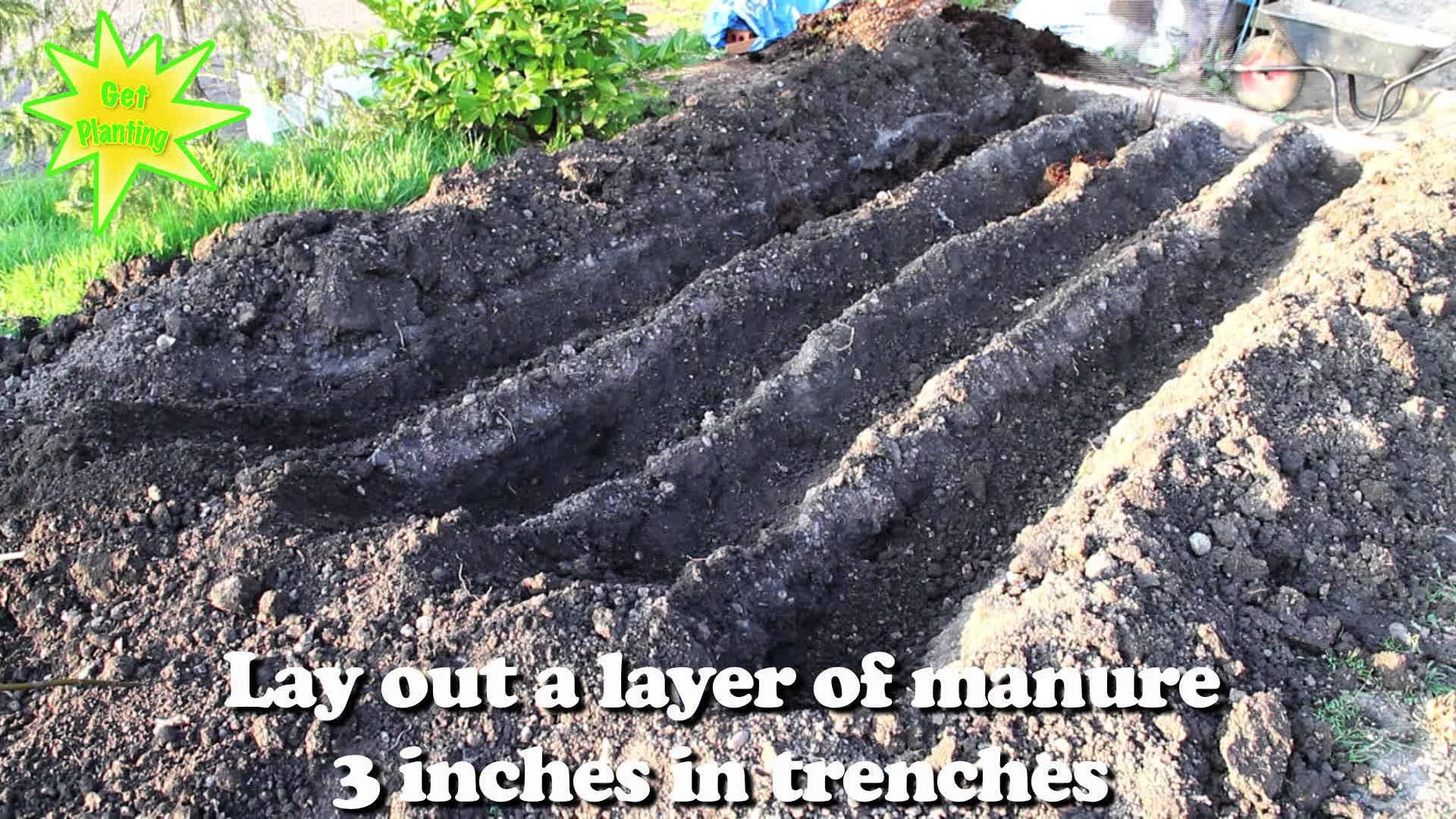 best way to plant vegetable garden