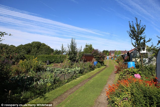 Homegrown: The gardeners had hoped to raise money to improve the allotment site in Bolton, pictured
