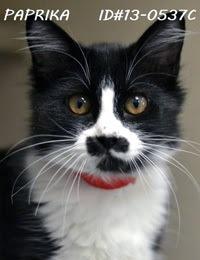 Cat that looks like Hitler
