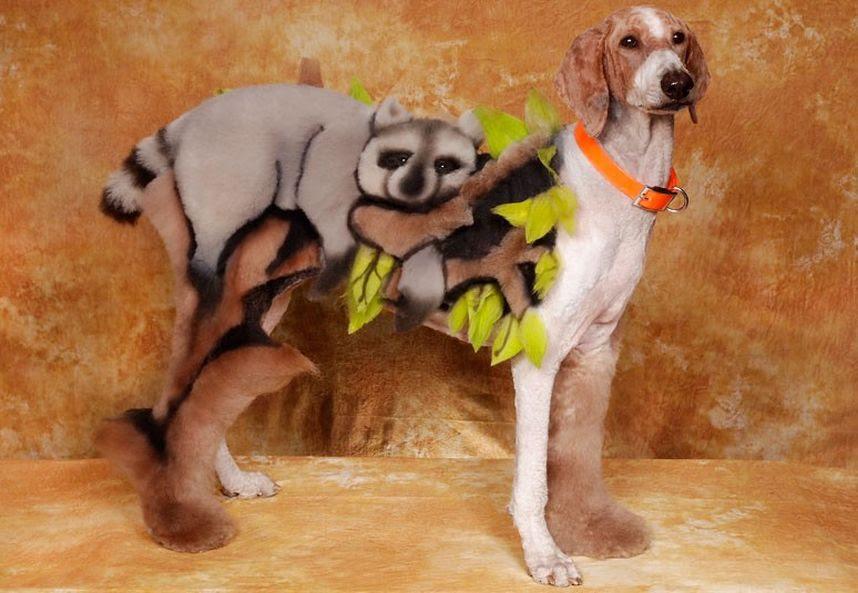 Penteados caninos bizarros 25