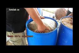 Cara / Tutorial Fermentasi Jerami (Damen) Padi Untuk Pakan Sapi / Kambing / Domba