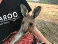 Battle to save Australian wildlife as bushfires rage