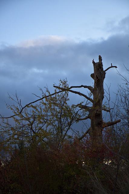 evening tree2