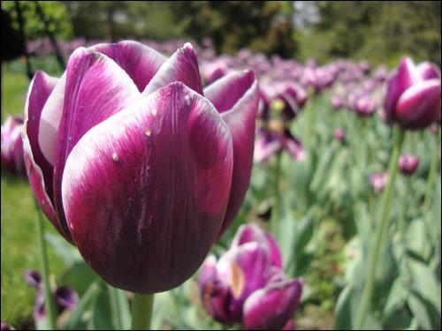 Royal Botanical Gardens, May 5, 2012