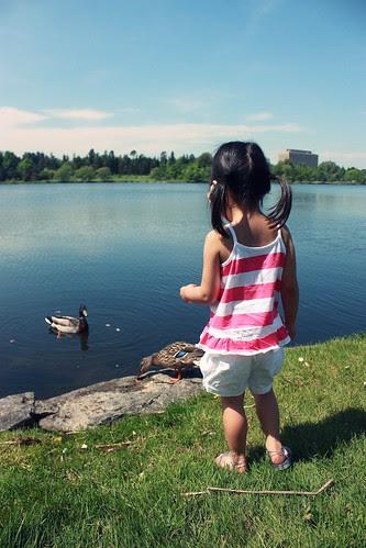 duck feeding & dandelions