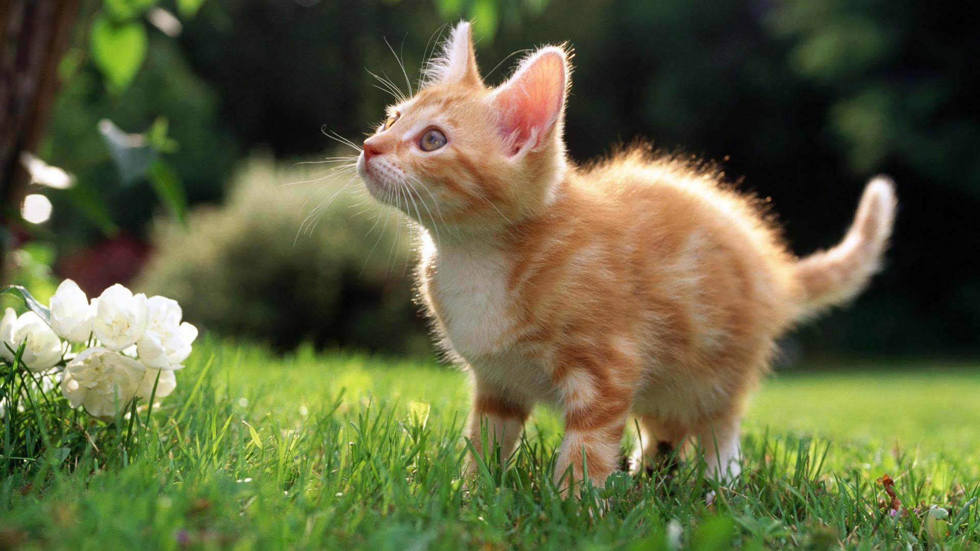 Hdの壁紙かわいい猫の写真 39 1920x1080 壁紙ダウンロード Hdの