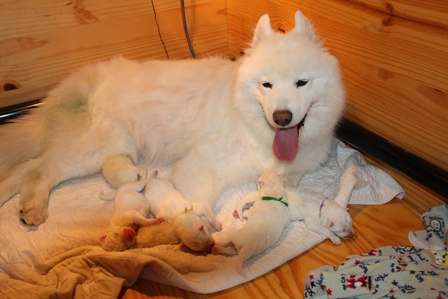 Allele with newborns