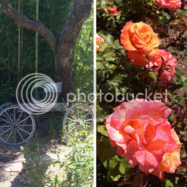 Rose Story Farm-4