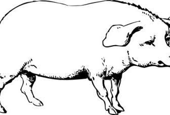74 Gambar Babi Untuk Diwarnai Kekinian