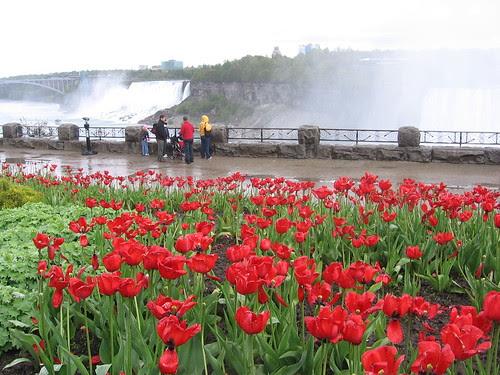 Jerry-Linnor in Niagara