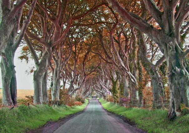 The Dark Hedges: Ένας δρόμος βγαλμένος από παραμύθι (15)