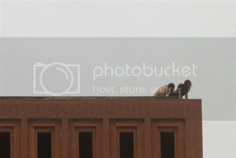 Mahasiswa Nge-Seks di Atas Atap Kampus