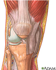 Illustration of the knee anatomy