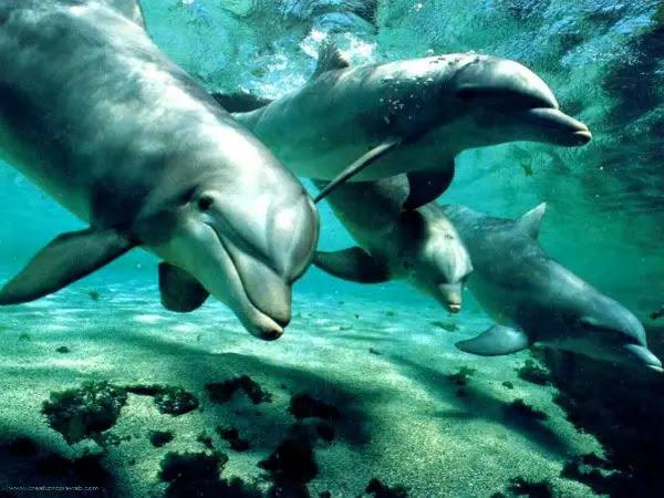 delfines_larga_memoria