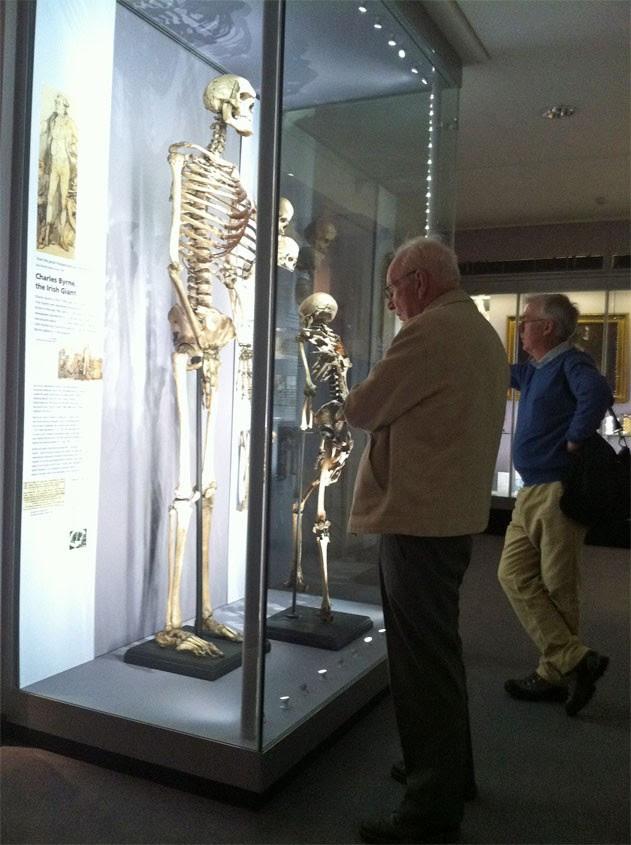 Visitante observa o esqueleto do 'gigante irlandês' em museu londrino (Foto: Dennis Barbosa/G1)