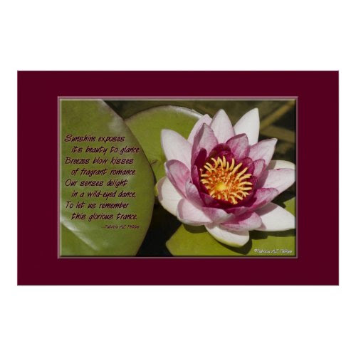 Pink Water Lily print