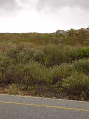 Sydafrika 2007 394