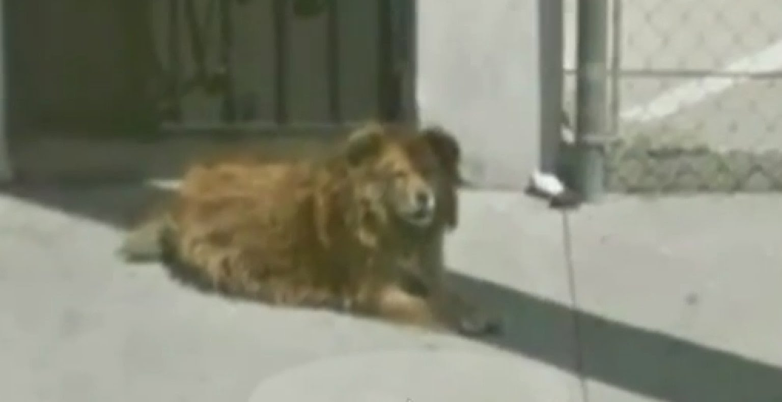 Google Maps Aids In Incredible Rescue Of Stray Dog In Los