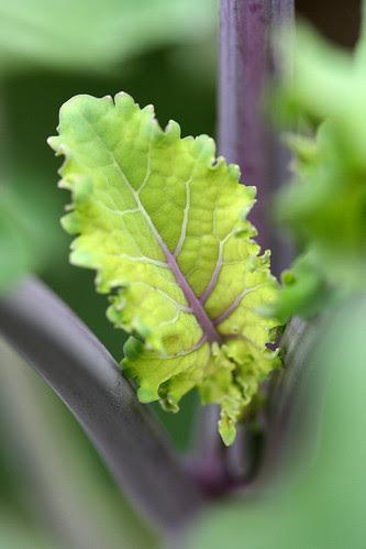 kale richmonds pride