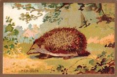 herrisson