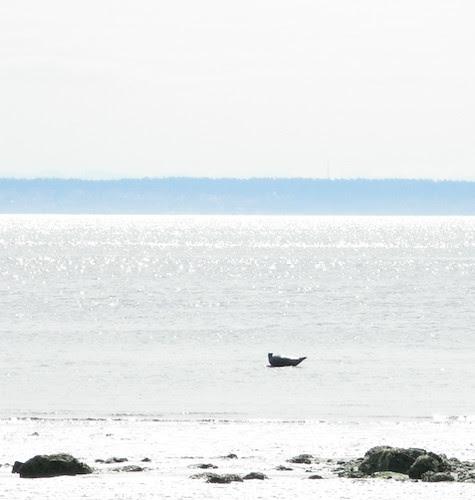 seal Double Bluff Beach