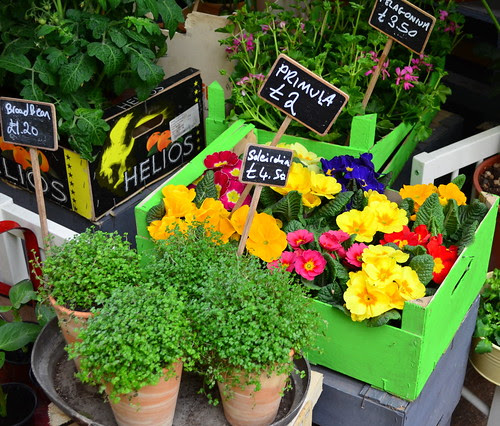 Market Plants