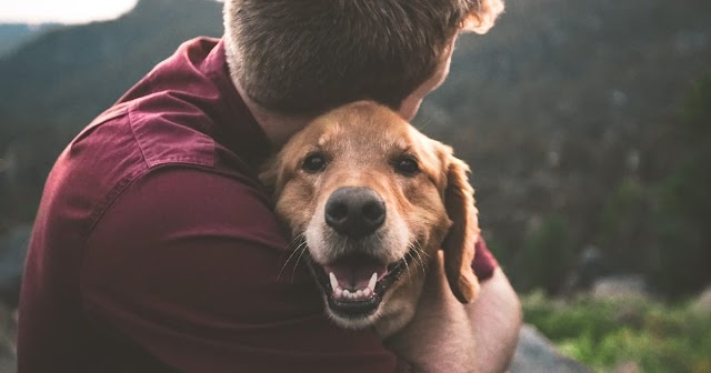Survey Reveals Our Dogs Help Us Cope With Lockdown Loneliness & Mental Health Struggles