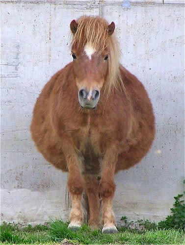 http://www.theequinest.com/images/cute-horse-19.jpg